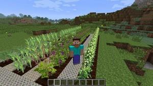 Пример посадки агрокультур