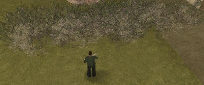 Вблизи трава выглядит также хорошо, как и издали