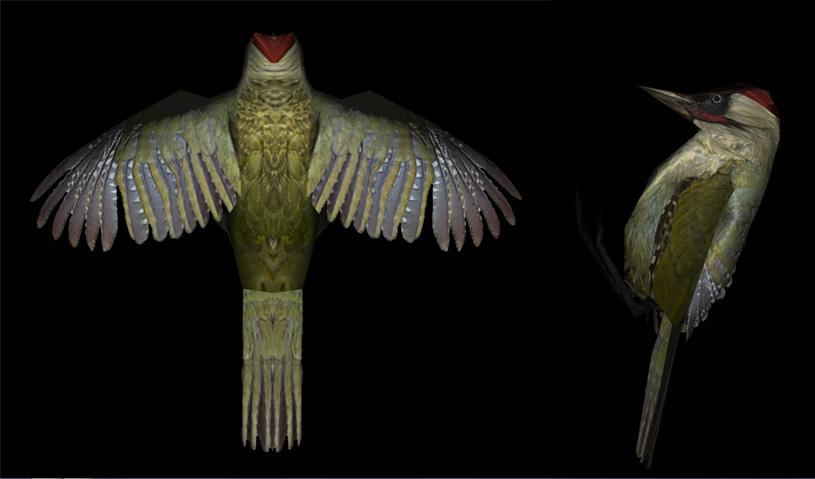 Skyrim SE: SkyBirds